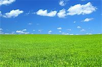 beautiful vivid green summer field with a few cumulus clouds   Stock Photo - Royalty-Freenull, Code: 400-05067399