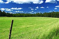picturesque country road and field, cumulus clouds in background, focus set in foreground Stock Photo - Royalty-Freenull, Code: 400-05080692