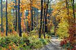 Fall in forest Stock Photo - Royalty-Free, Artist: phodopus                      , Code: 400-05086848