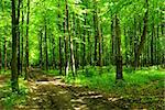 path is in the green forest Stock Photo - Royalty-Free, Artist: Pakhnyushchyy                 , Code: 400-05098136