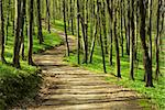 path is in the green forest Stock Photo - Royalty-Free, Artist: Pakhnyushchyy                 , Code: 400-05101377