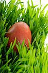 red easter egg  in green grass Stock Photo - Royalty-Free, Artist: vnlit                         , Code: 400-05113434
