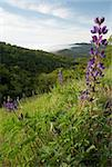 Lupine Over Morning Misty Mountain Valley at Sunrise Stock Photo - Royalty-Free, Artist: south12th                     , Code: 400-05124812