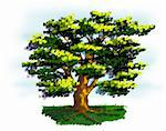 Colorful illustration of an old tree. Stock Photo - Royalty-Free, Artist: pinare                        , Code: 400-05126898