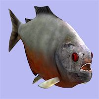 piranha fish - Piranha fish in water With Clipping Path Stock Photo - Royalty-Freenull, Code: 400-05128877
