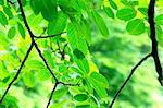 Fresh green leaves background