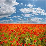 poppy field with blue sky Stock Photo - Royalty-Free, Artist: doodkoalex                    , Code: 400-05147855