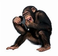 smiling chimpanzee - Young Chimpanzee looking at his teeth in a mirror  in front of a white background Stock Photo - Royalty-Freenull, Code: 400-05148183