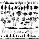 Detailed vectoral tree, leaf, branch and grass silhouettes. Stock Photo - Royalty-Free, Artist: pinare                        , Code: 400-05149938