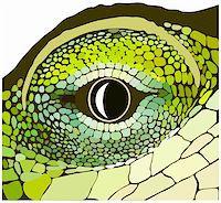 snake skin - Eye of a reptile. Vector art in EPS format. Stock Photo - Royalty-Freenull, Code: 400-05181065