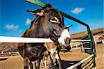 closeup of a donkey on a farm on the blue sky Stock Photo - Royalty-Free, Artist: nito                          , Code: 400-05199863