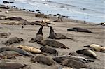 Sea lions on Big Sur California West Coast