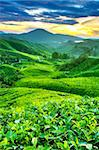 Tea Plantations at Cameron Highlands Malaysia. Sunrise in morning with fog. Stock Photo - Royalty-Free, Artist: szefei                        , Code: 400-05210611