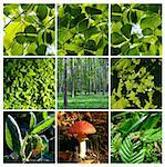 Forest details with mushroom Stock Photo - Royalty-Free, Artist: Carpathian                    , Code: 400-05222734
