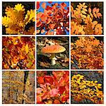 Autumn forest details with mushroom Stock Photo - Royalty-Free, Artist: Carpathian                    , Code: 400-05222735