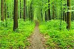 a path is in the green forest Stock Photo - Royalty-Free, Artist: Pakhnyushchyy                 , Code: 400-05233313