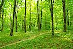 a path is in the green forest Stock Photo - Royalty-Free, Artist: Pakhnyushchyy                 , Code: 400-05234094