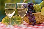 Two glasses of wine and fresh grapes in autumn, after harvest