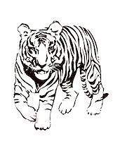 Vector abstract illustration. The white predatory tiger. Stock Photo - Royalty-Freenull, Code: 400-05250521