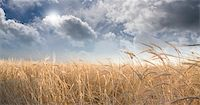 rolffimages (artist) - Field and Sky Stock Photo - Royalty-Freenull, Code: 400-05250626