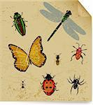 The dried insects on old book sheet. Vector illustration Stock Photo - Royalty-Free, Artist: emaria                        , Code: 400-05255770