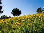 spring in the country side of Catalonia, Spain Stock Photo - Royalty-Free, Artist: csp                           , Code: 400-05261171