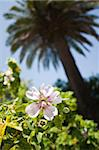 Garden in Canary Islands, Spain Stock Photo - Royalty-Free, Artist: csp                           , Code: 400-05261232