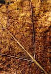 Close up of dry leave Stock Photo - Royalty-Free, Artist: janaka                        , Code: 400-05264668