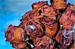 closeup of a dried roses bouquet with spiderweb