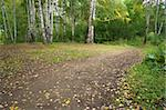 The path in the autumn forest with birches. The natural background for any purpose Stock Photo - Royalty-Free, Artist: Supertrooper                  , Code: 400-05266492