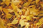 Autumn colorful leaves, natural backdrop for any purpose Stock Photo - Royalty-Free, Artist: Supertrooper                  , Code: 400-05268247