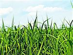 switch grass the renewable support for heating and diesel production Stock Photo - Royalty-Free, Artist: Jochen                        , Code: 400-05279426
