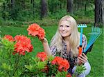 Pretty gardener woman with red flower bush and gardening tools outdoors Stock Photo - Royalty-Free, Artist: smartfoto                     , Code: 400-05281719