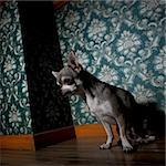 Chihuahua sitting in front of floral wallpaper
