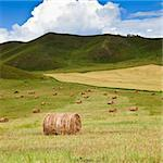 the scene of the meadow Inner Mongolia . Stock Photo - Royalty-Free, Artist: csguy                         , Code: 400-05283688