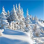 winter calm mountain landscape with beautiful fir trees  on slope (Kukol Mount, Carpathian Mountains, Ukraine) Stock Photo - Royalty-Free, Artist: Yuriy                         , Code: 400-05286363