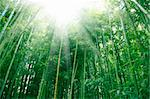 the bamboo of a forest outdoor in china. Stock Photo - Royalty-Free, Artist: csguy                         , Code: 400-05287082