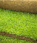 Turf grass roll partially unrolled - closeup, shallow depth of field Stock Photo - Royalty-Free, Artist: lightkeeper                   , Code: 400-05290343