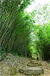 bamboo forest with path Stock Photo - Royalty-Free, Artist: leungchopan                   , Code: 400-05291278
