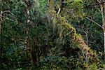 Tree covered with epiphytes in the atlantic rainforest of southern Brazil. Stock Photo - Royalty-Free, Artist: xicoputini                    , Code: 400-05295670