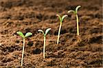 Green seedling illustrating concept of new life Stock Photo - Royalty-Free, Artist: ElnurCrestock                 , Code: 400-05297824
