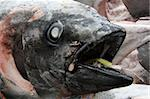 Fish Heads - Tsukiji Fish Market, Tokyo, Japan Stock Photo - Royalty-Free, Artist: imagexphoto                   , Code: 400-05304969