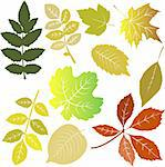 Leaves Stock Photo - Royalty-Free, Artist: albumkoretsky                 , Code: 400-05308494