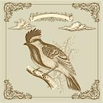 Retro card with bird Stock Photo - Royalty-Free, Artist: marinakim                     , Code: 400-05325834