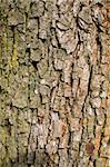 Stock photo: nature: an image of a background of brown bark Stock Photo - Royalty-Free, Artist: velkol                        , Code: 400-05326457