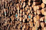 A view of huge stacks of logs piled high at a lumber factory Stock Photo - Royalty-Free, Artist: xtrekx                        , Code: 400-05326740