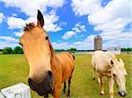 A close up of a horse on a farm Stock Photo - Royalty-Free, Artist: sepavo                        , Code: 400-05335880