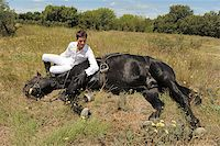 young man and his black stallion in  a field Stock Photo - Royalty-Freenull, Code: 400-05346704