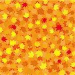 Autumn seamless background with maple leaves, vector illustration Stock Photo - Royalty-Free, Artist: MarketOlya                    , Code: 400-05348211