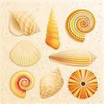 Seashell collection on sand background. Vector illustration. Stock Photo - Royalty-Free, Artist: avian                         , Code: 400-05348763